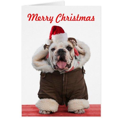 funny christmas bulldog - photo #3