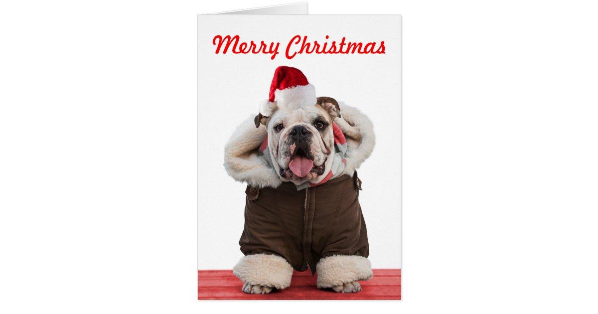 funny christmas bulldog - photo #24