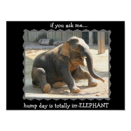 Funny Elephant Hump Day Poster (16x12) | Zazzle