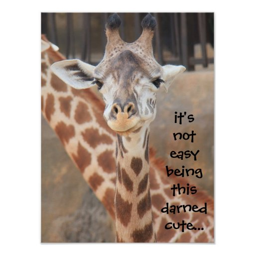 Giraffe Quotes Funny: Funny Giraffe Poster (16x12) Not Easy Being Cute!