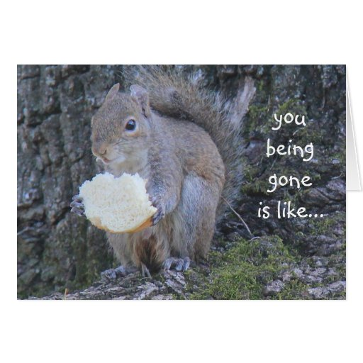 Funny Squirrel Card; Missing You