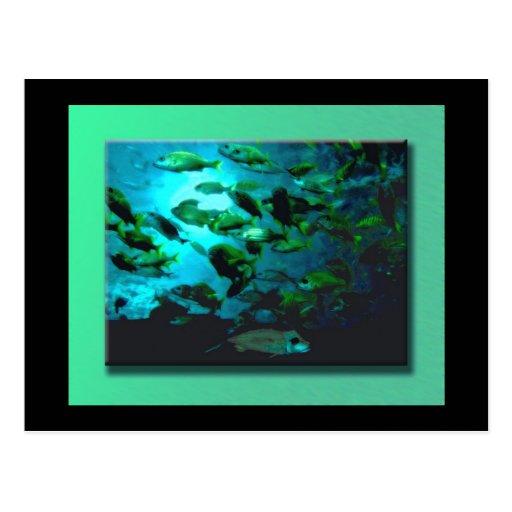 GA Aquarium Postcard