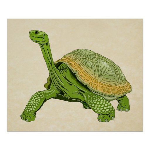 galapagos turtle coloring pages - photo #22