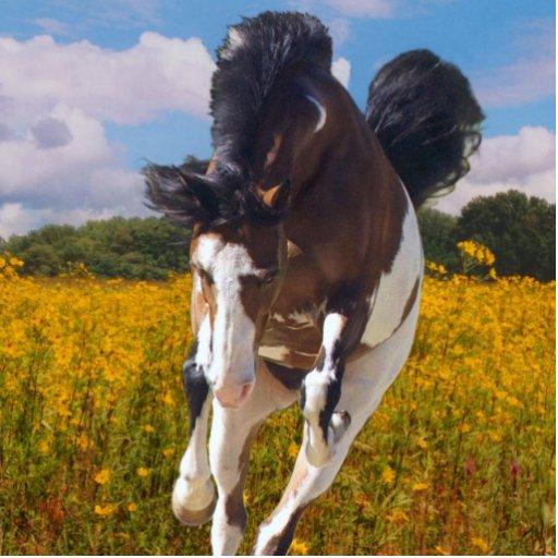 Galloping Paint Horse, Photo Sculpture | Zazzle