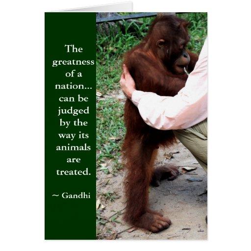 Animal cruelty notes