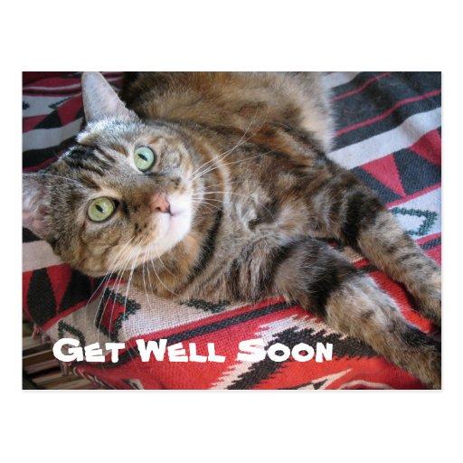 Get Well Soon Cat Postcard | Zazzle