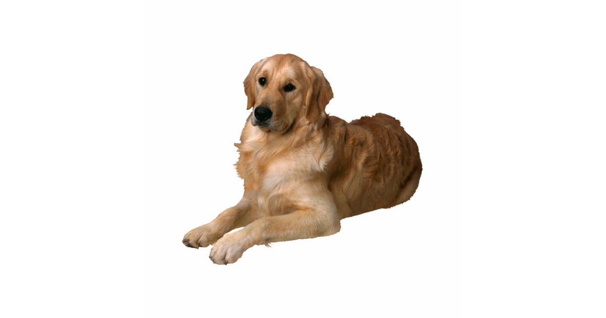 Golden Retriever Cutout Zazzle