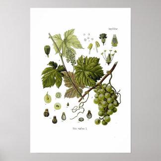 Teen posters art prints grapes