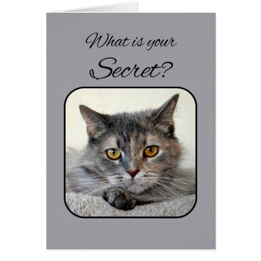 Birthday Orange Cat: Gray And Orange Tortoiseshell Cat Happy Birthday Card
