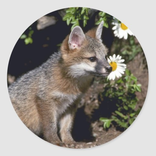 Gray fox young kit sticker