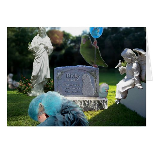 Grieving Pet Owner Sympathy Greeting Card Birds