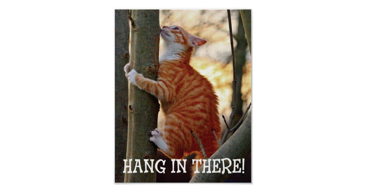 Hang In There Cat Poster Zazzle