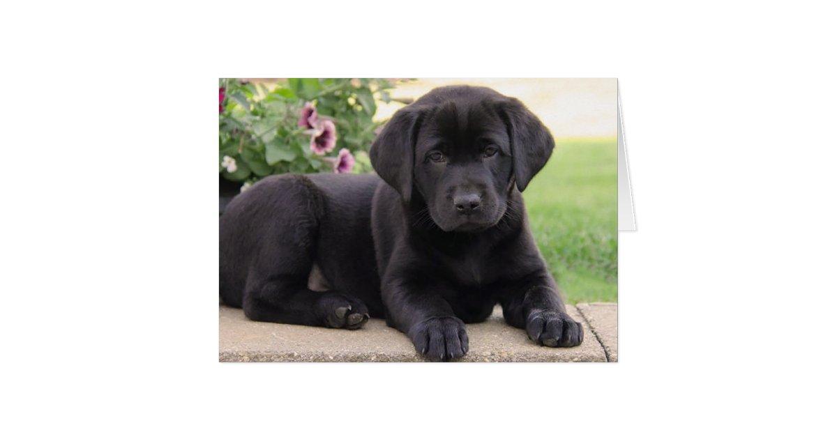 Outstanding Happy Birthday Black Labrador Retriever Puppy Dog Card Funny Birthday Cards Online Chimdamsfinfo