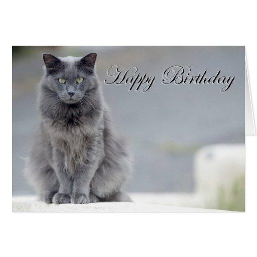 happy birthday gray cat card  zazzle