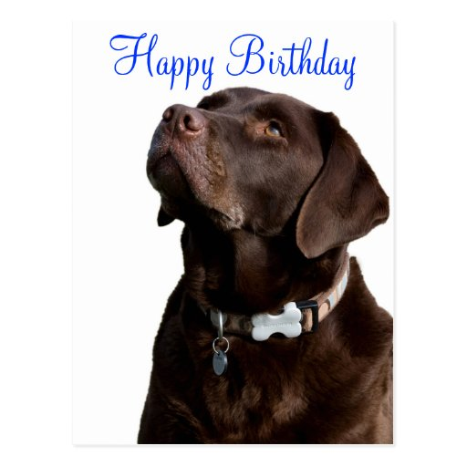 happy birthday labrador retriever dog post card zazzle. Black Bedroom Furniture Sets. Home Design Ideas