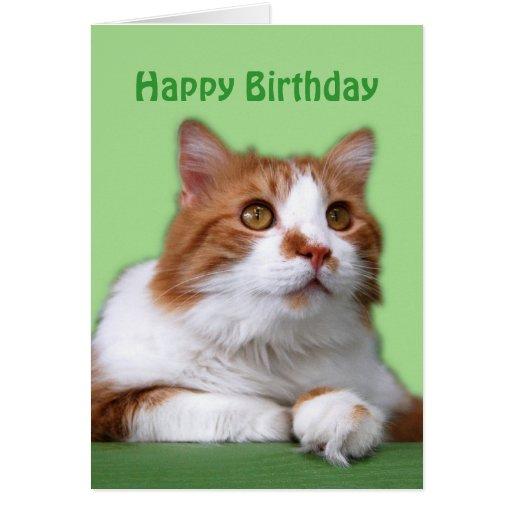 Birthday Orange Cat: Happy Birthday Orange And White Thoughtful Cat Card