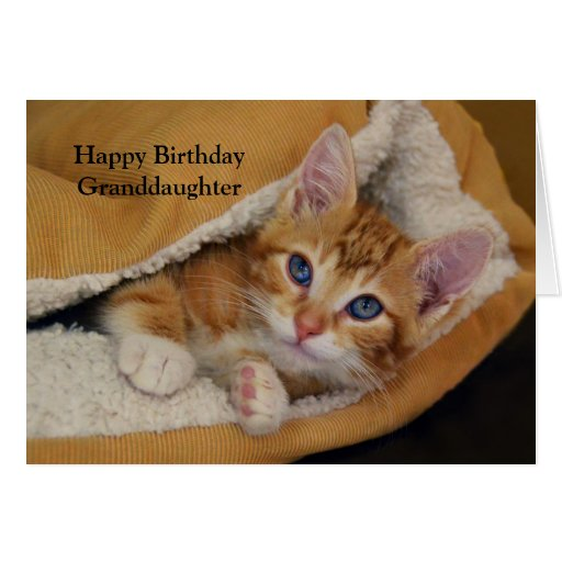 Birthday Orange Cat: Happy Birthday, Orange Tabby Kitten In Bed Card