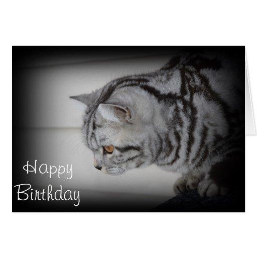 Birthday Orange Cat: Happy Birthday - Silver Tabby Cat Greeting Card