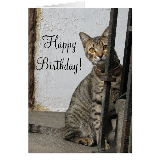Birthday Orange Cat: Happy Birthday Tabby Cat Greeting Card