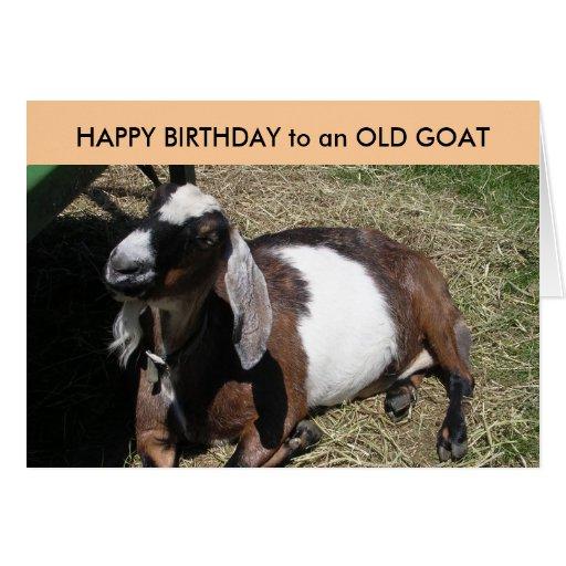 Happy birthday goat - photo#29