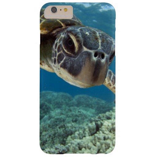 Hawaiian Sea Turtles Gifts T Shirts Art Posters