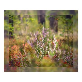 Heath forest photo print