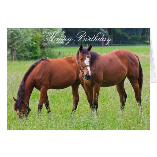 Brilliant Horse Beautiful Custom Horses Birthday Card Zazzle Personalised Birthday Cards Epsylily Jamesorg