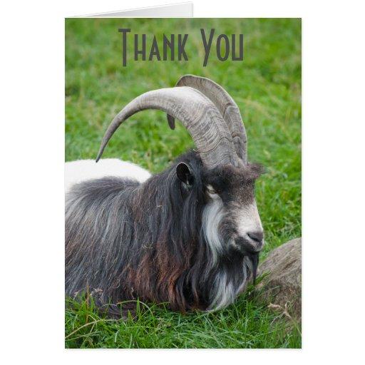 Iceland Goat Thank You Card Zazzle