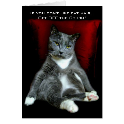 If You Don T Like Cat Hair Get Off The Couch Card Zazzle