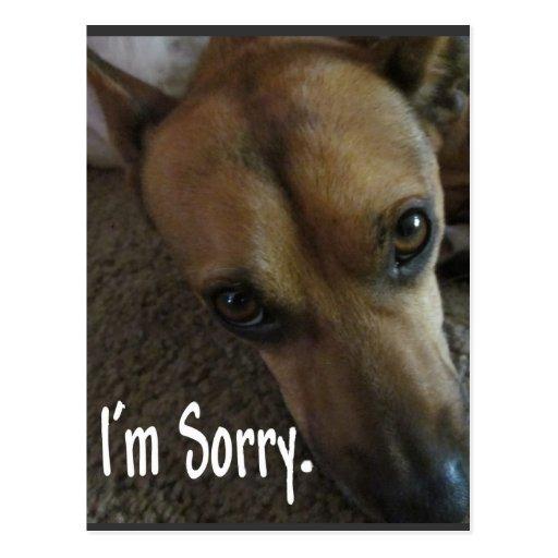 Sad Sorry Images: I'm Sorry Sad Dog Postcard