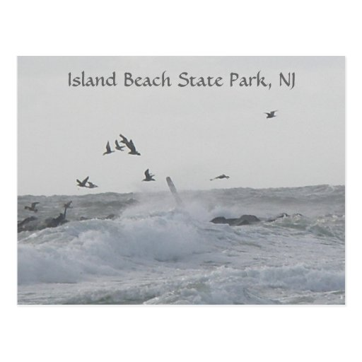 Island Beach State Park: Jetty-Island Beach State Park, NJ Postcard
