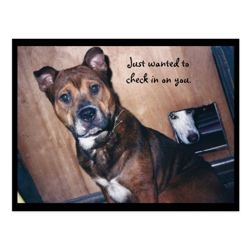 just_checking_in_on_you_post_cards-r39f7