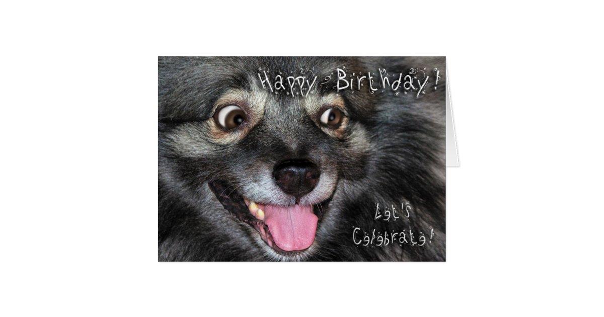 Keeshond Happy Birthday greeting card | Zazzle