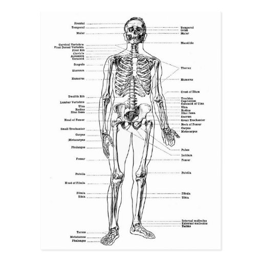 detailed wiring diagram throttle labeled skeleton diagram postcard | zazzle detailed skeleton diagram
