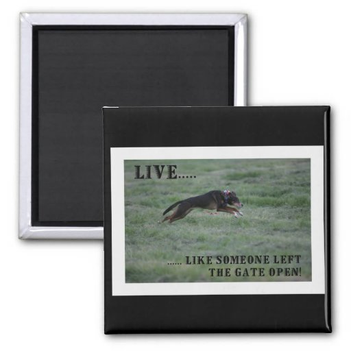 Live Like Someone Left The Gate Open Quote: LIVE LIKE SOMEONE LEFT THE GATE OPEN MAGNET