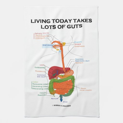 Living Quarters Washcloths: Living Today Takes Lots Of Guts Digestive System Kitchen