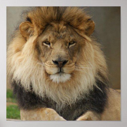 MAJESTIC LION POSTER