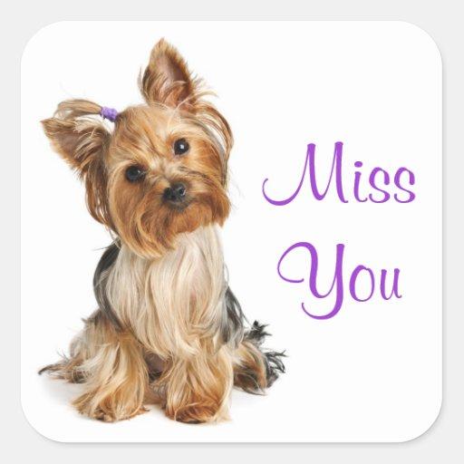 Miss You Yorkie Miss you yorkshire terrierI Miss You Yorkie