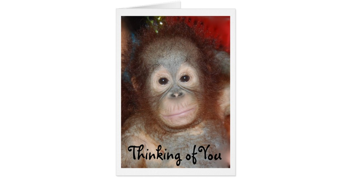 Missing You Sad Face Baby Animal Card | Zazzle