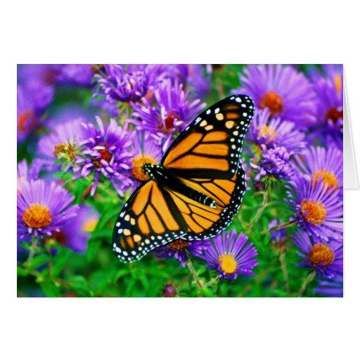 Monarch Butterfly On Purple Flowers Greeting Card