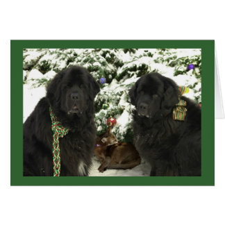 Newfoundland Dog Cards, Newfoundland Dog Card Templates ...