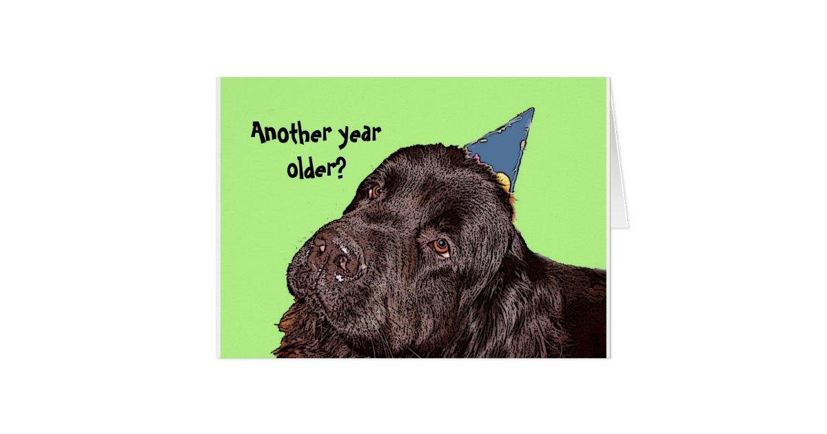 Newfoundland Dog Birthday Card   Zazzle