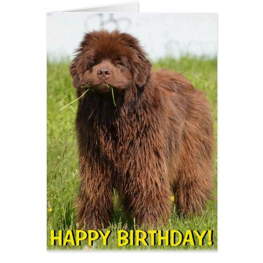 Newfoundland puppy birthday card   Zazzle