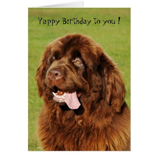 Newfoundland Yappy Birthday Card   Zazzle