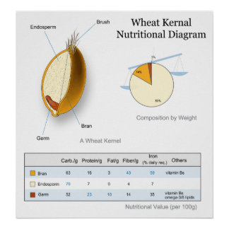 label wheat diagram label dna diagram nutrition diagram gifts on zazzle