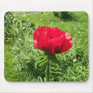 Oriental Red Poppy Mousepad mousepad
