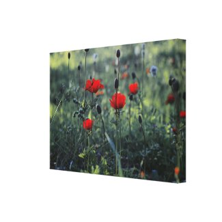 Overblown anemone stretched canvas print