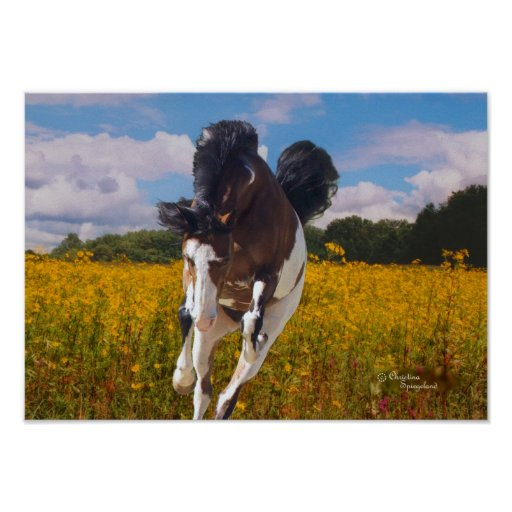 Paint Horse Galloping Poster | Zazzle