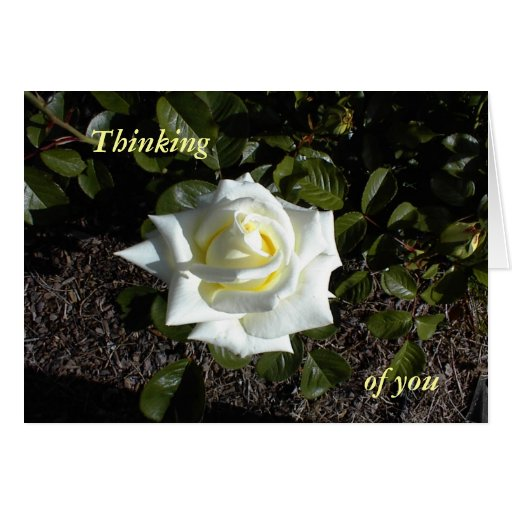 Pale Yellow Rose: Thinking, of you Greeting Card | Zazzle