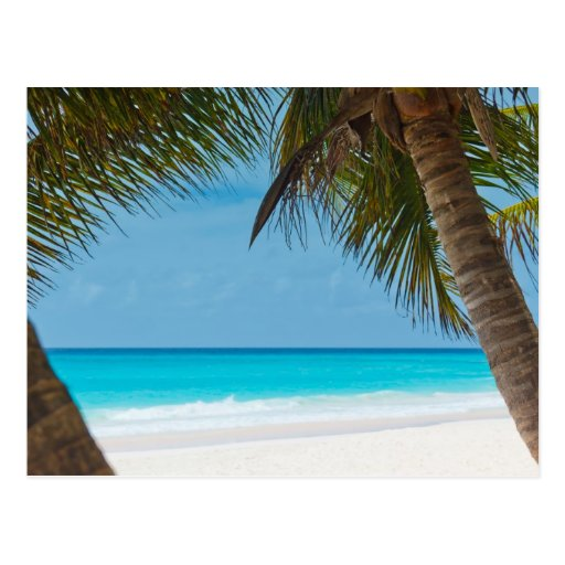 Paradise Beach: Perfect Tropical Paradise Beach Postcard